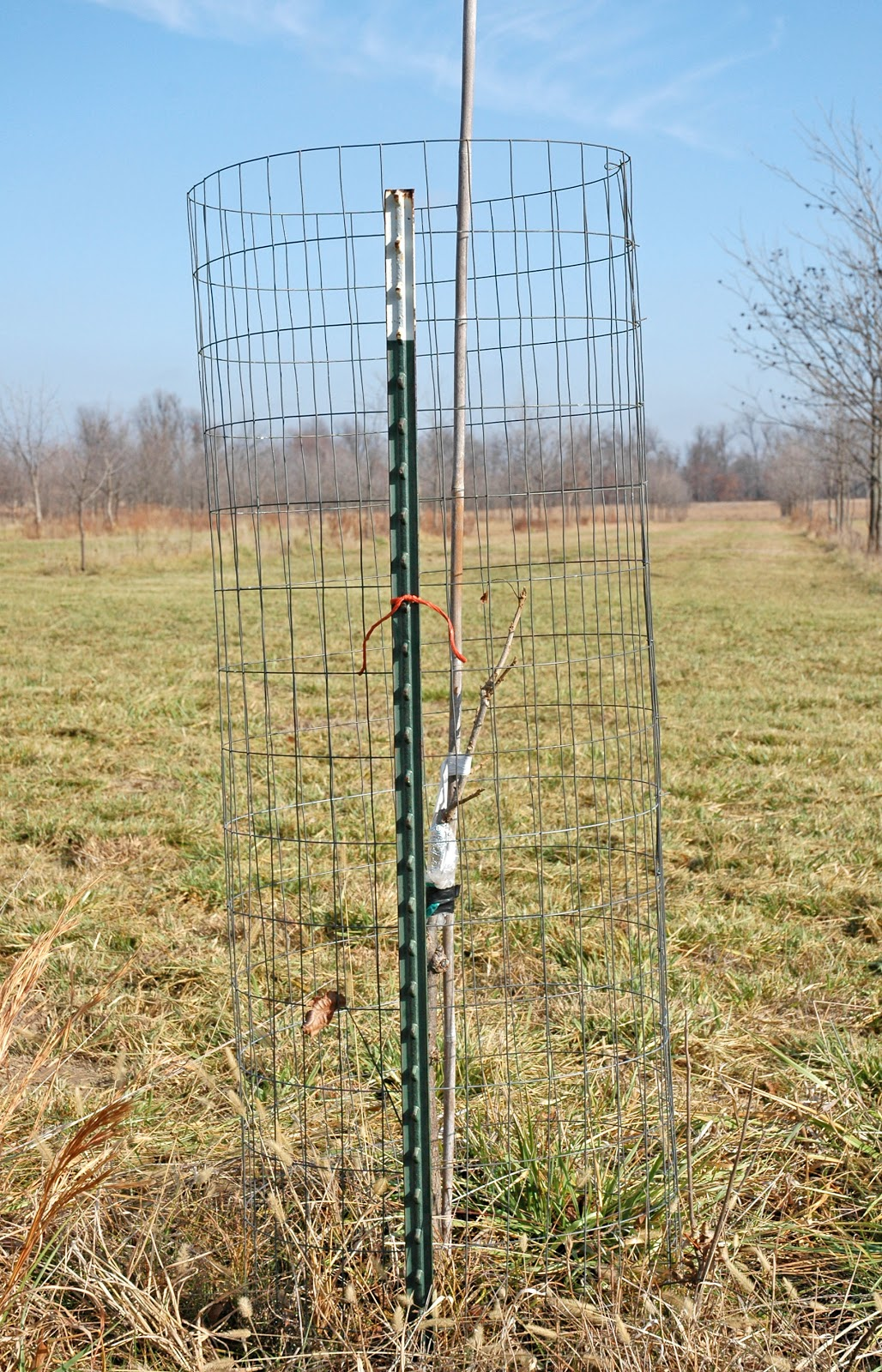Tree Wire Cage Center Triac Schematics Group Picture Image By Tag Keywordpicturescom Northern Pecans Protecting Young Pecan Trees Against Deer Damage Rh Northernpecans Blogspot Com Three Central