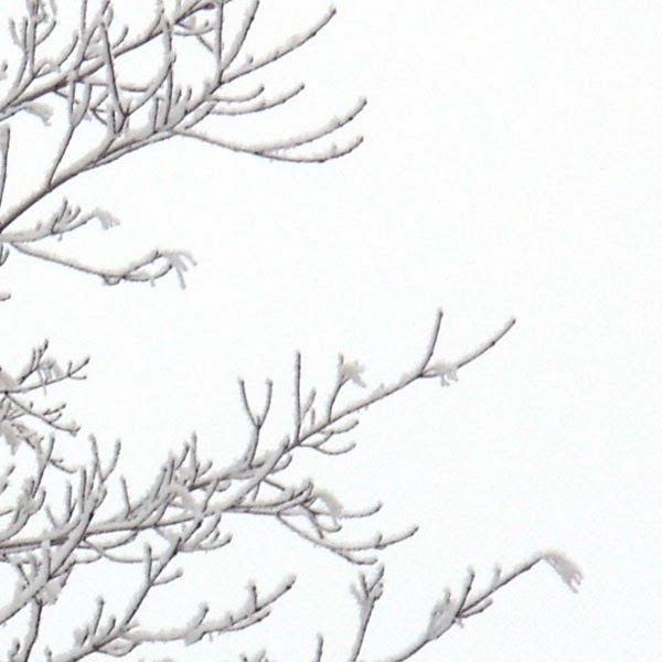 Frost on Bare Branches - Snow Photograph