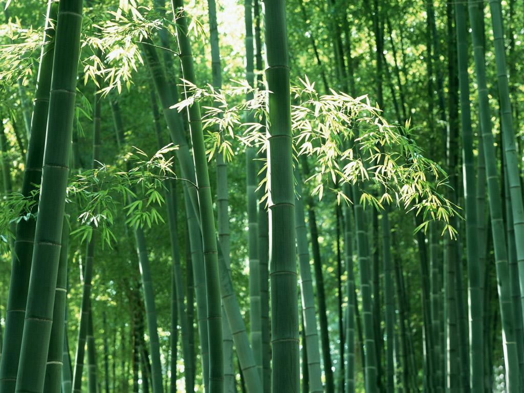 http://2.bp.blogspot.com/-gX06SRBwiFY/Tuhi6dfEJ1I/AAAAAAAAAic/kYq2Ebrc278/s1600/34-bambu.jpg