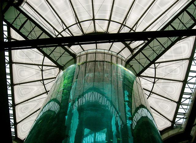 AquaDom: o maior aquário cilíndrico do mundo