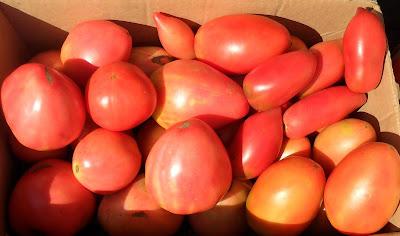 Мои любимые помидоры!