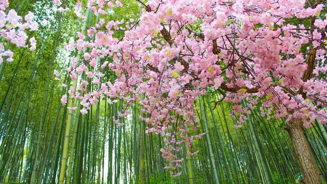 Spring Flower Festivals in Korea
