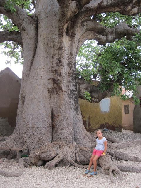El Baobab sagrado de Fadiouth conserva su follaje durante todo el año
