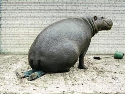 funny hippos photos 2011 all funny