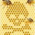 Η εξαφάνιση των μελισσών και η προφητεία!