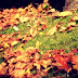 Cuantas hojas barrería