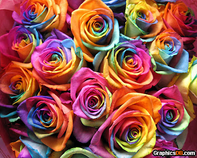 mawar pelangi surabaya, toko bunga mawar di surabaya