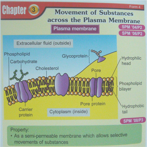 cells and movement of substances Movement of substances this movement of molecules is what enables the living systems of plants and does osmosis have similar effects on animal cells.