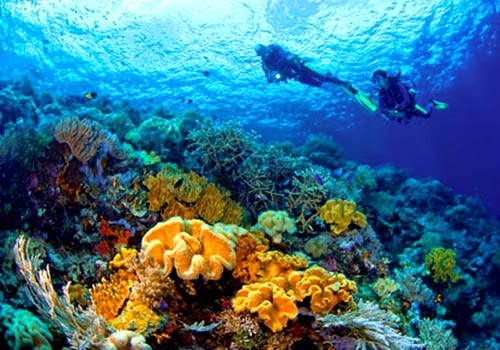 diving in wakatobi, snorkeling in Wakatobi, underwater world, underwater photography, honeymoon in Wakatobi, wakatobi resorts, holiday in wakatobi