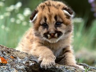 #12 Cute Animal Wallpaper