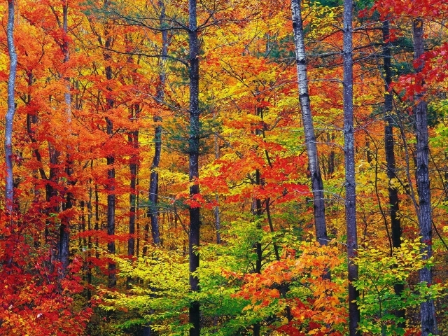 autumn wallpapers hd best - photo #27