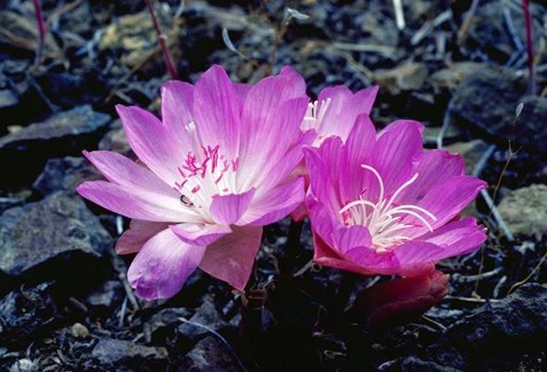 http://www.history.com/photos/montana/photo2