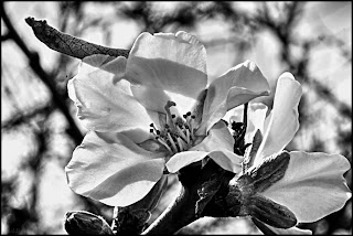 Black and white close up shot of a wild flower