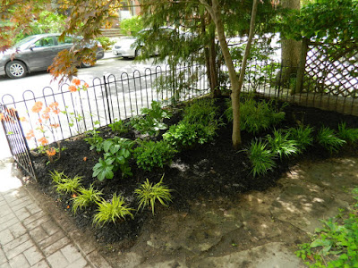 MacPherson Avenue front garden makeover after by Paul Jung Gardening Services Toronto
