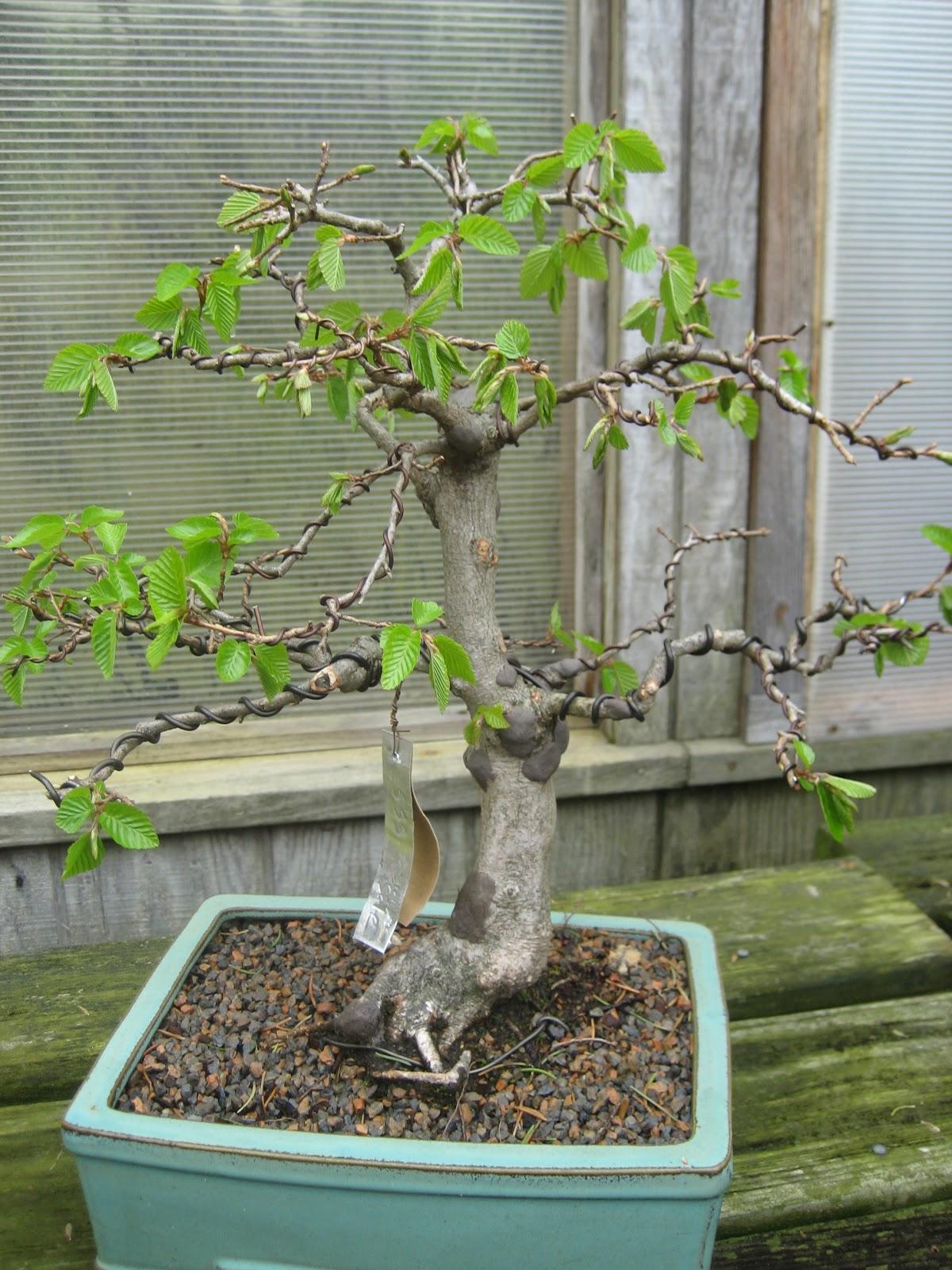 Dirty Horticulture December 2012