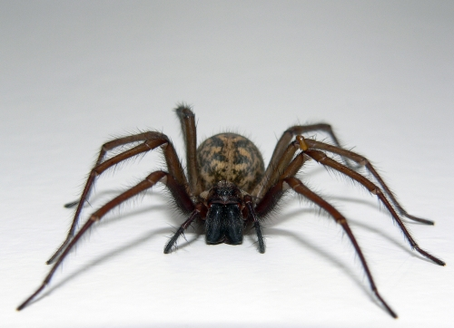10 Creepy, Crazy Spider Facts  Animals Blog
