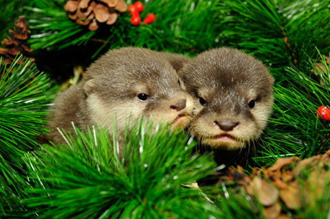 Bacon beer pizza and baby otters for Christmas pictures of baby animals