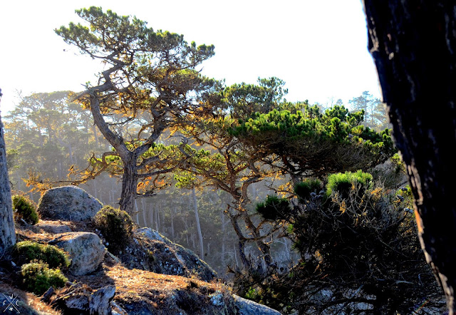 Point Lobos, Californie, USA