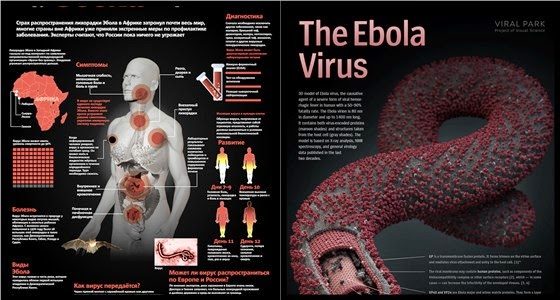 Симптомы Эболы