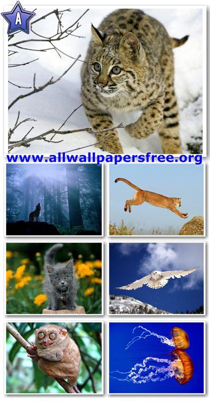 60 Amazing Animals Wallpapers 1280 X 1024 [Set 8]