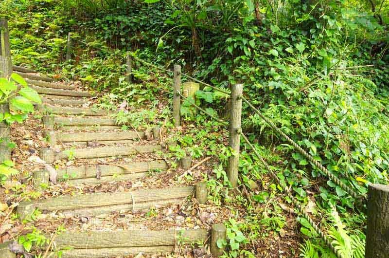 log stairway, trail