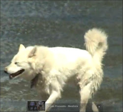 Utube video of the Wolf