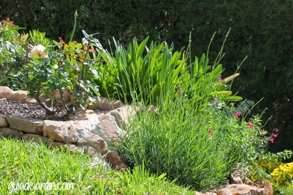 Lavanda guia de jardin for Jardines de lavanda