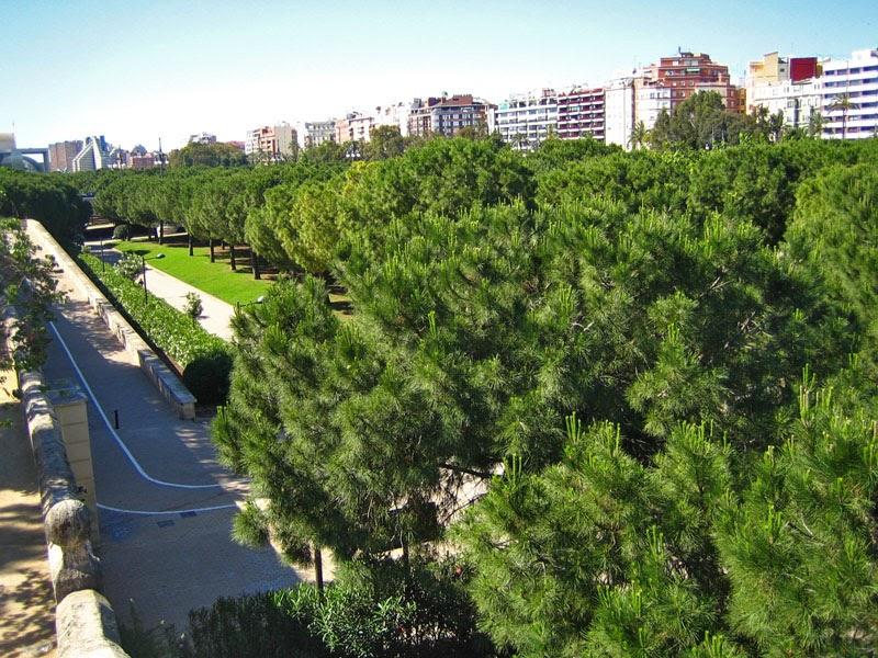 Vida sana y literatura mantenerse en forma y respirar oxigeno en la ciudad de valencia - Jardin del turia valencia ...