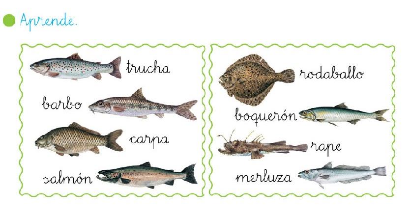 Primeiro da rabadeira los peces de agua dulce y los peces for Peces agua dulce