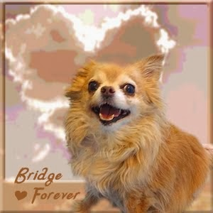 Run Free Bridget