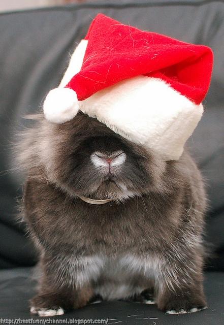 Funny Christmas bunny.