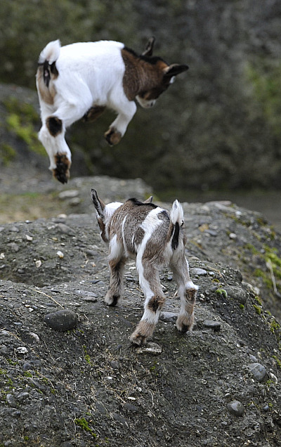 November 2012 | Funny And Cute Animals
