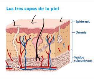 La cosmetología los sedimentos grasosos sobre la persona