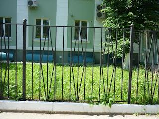 Забор металлический из профильной трубы. Фото 9