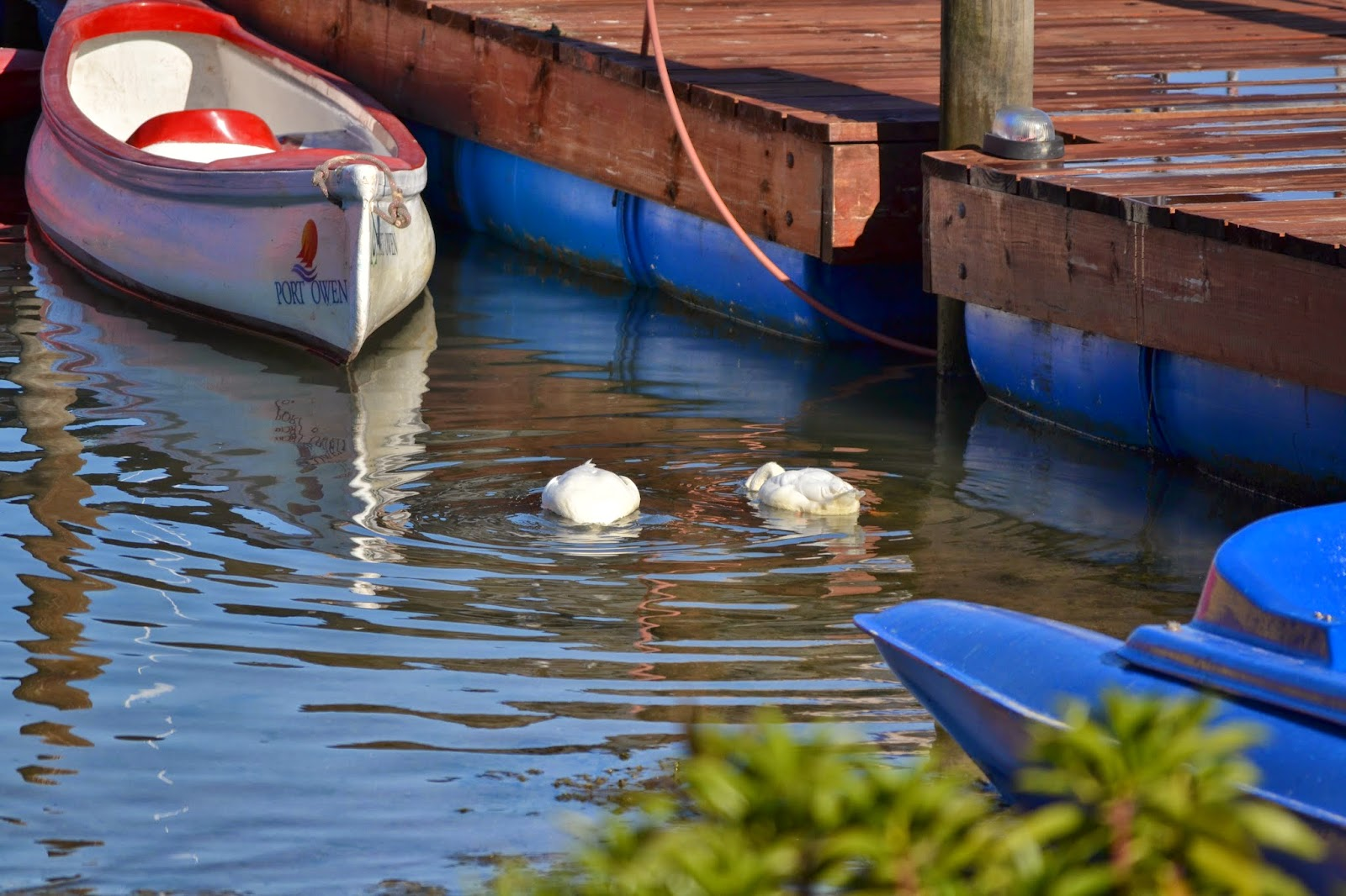 Ducks next to jetty and boats
