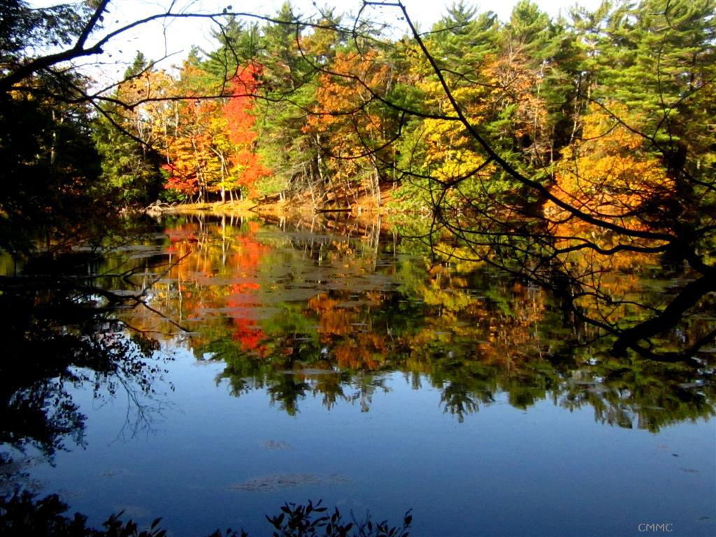 Plants Amaze Me Fall Color At Ludington State Park