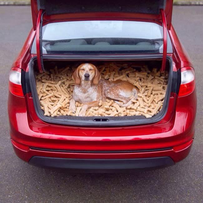 El Perro Consentido