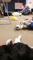 AchyPaw Dog Massage class