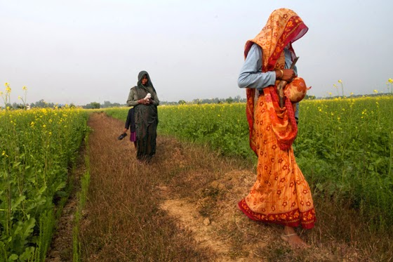 Covering their faces farm hands walk through the mustard field in India. These women  come from dalit communities and suffer various types of gender crimes including  molestation and rape followed by police apathy at the crimes.(Arindam Mukherjee/ Demotix - All rights reserved)