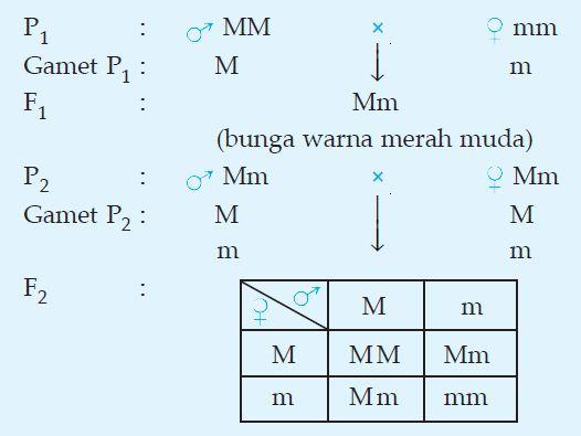 Pada Tanaman Bunga Pukul Empat Gen M Epistasis Informasi Seputar Tanaman Hias