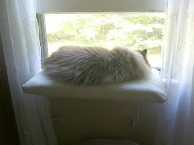 window-perch 02