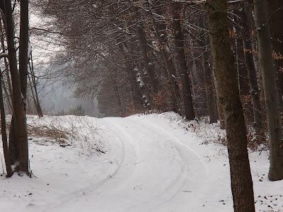 Smog w Krakowie, Las Bronaczowa, jazda na sankach, zimowy spacer