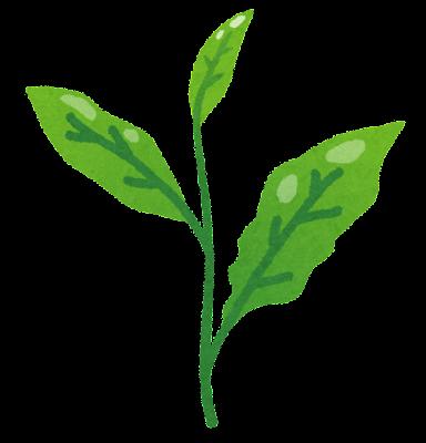 茶葉のイラスト