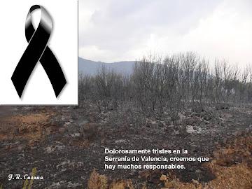 Luto en la Serranía de Valencia desde el 29 de Junio del 2012