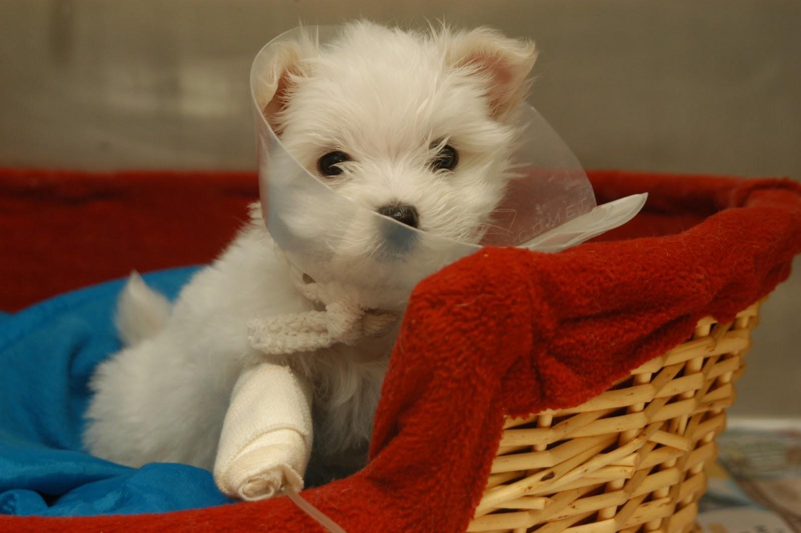 puppy with elizabethan collar