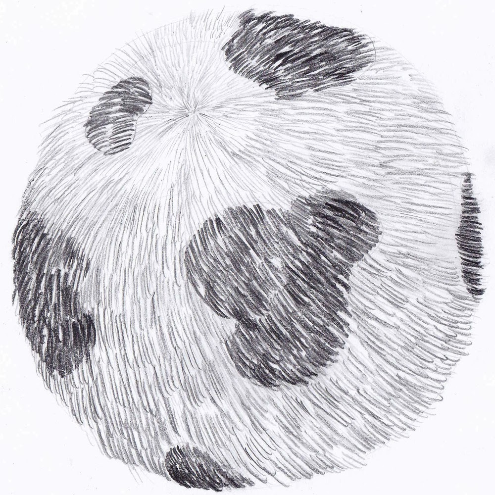 This Fur Ball Doesn't Look That Bad, But I Still Cannot Break The Code Of Drawing  Fur I Wish Do You Have Some Tips For Me? How Can I Perfect It?