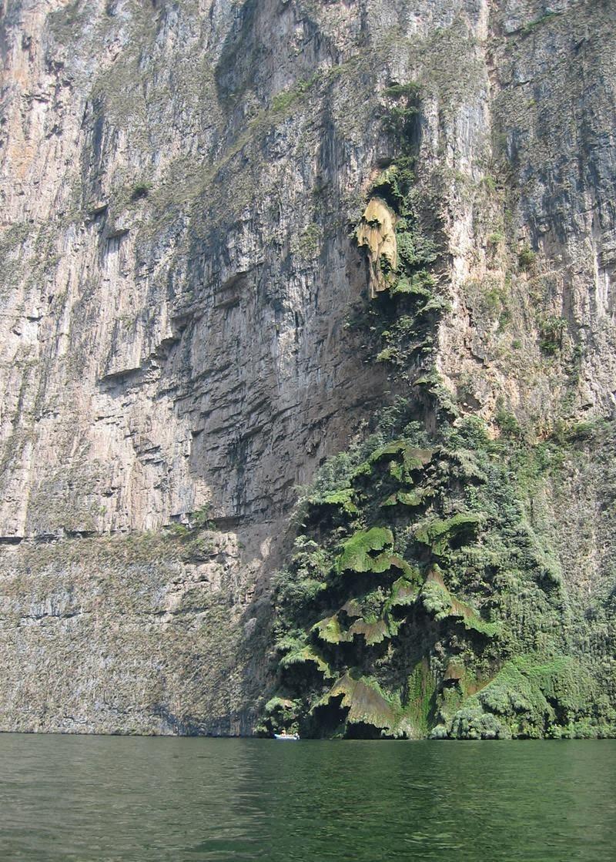 Christmas tree Waterfall | Arbol de Navidad Cascada, Mexico