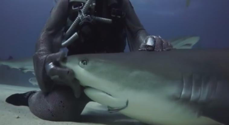 Descubre TU MUNDO: Video: acariciando tiburones «con una técnica ...