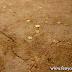 Rejtélyes csillagtérképet találtak az ősi japán sírbolt mennyezetén