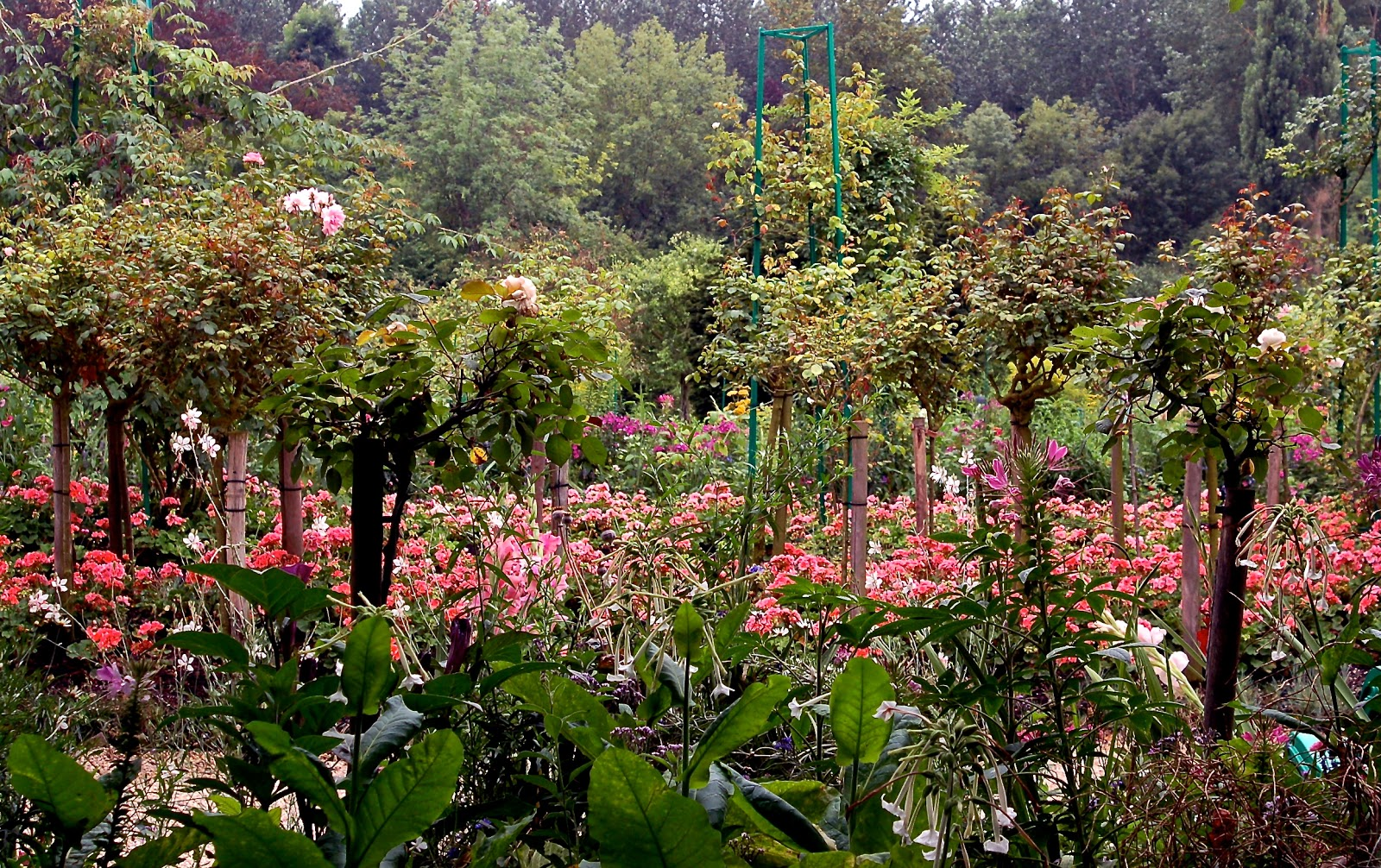 imac\'s Photos from the Minds Eye: Monets Garden. Giverny Paris France